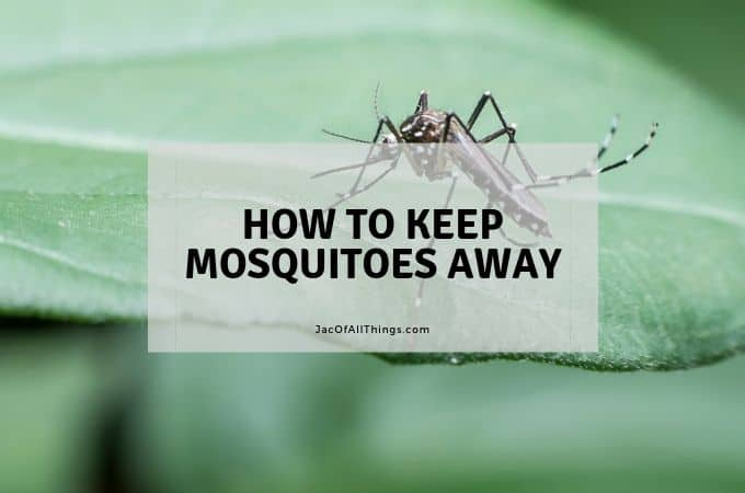 How to Keep Mosquitoes Away – 8 Incredible Tips!