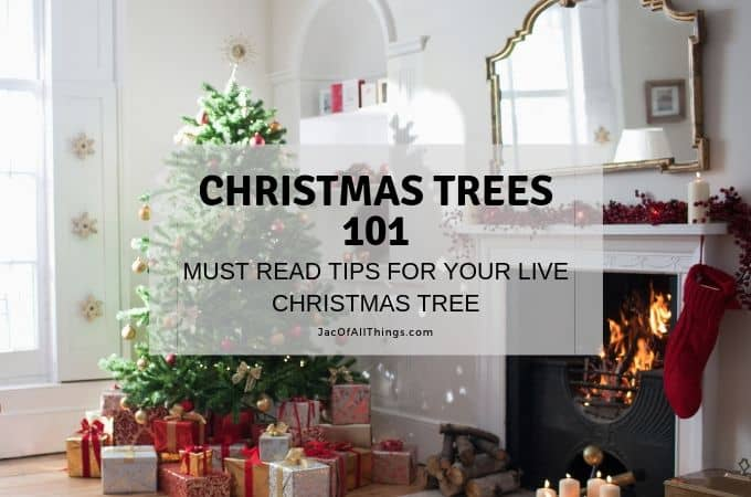 Must Read Tips for Cutting Down a Christmas Tree