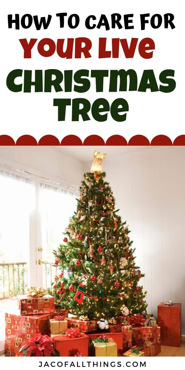 Everything you need to know about cutting down a Christmas tree for this holiday season. Learn how to pick out the best tree, how to care for your live Christmas tree, and even how to dispose of your Christmas tree.